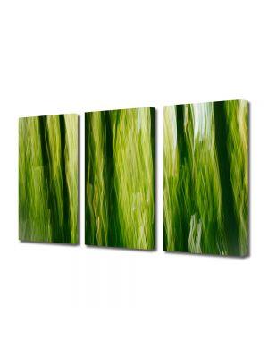Set Tablouri Multicanvas 3 Piese Abstract Decorativ In jungla