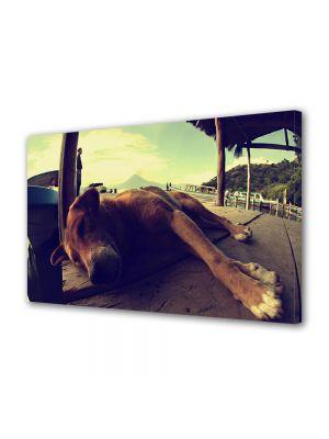 Tablou Canvas Animale Caine adormit pe ponton