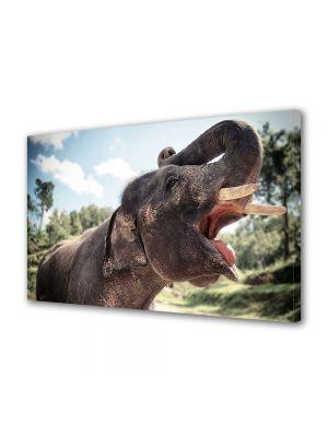 Tablou Canvas Animale Elefant in Tailanda