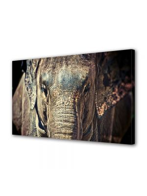 Tablou Canvas Luminos in intuneric VarioView LED Animale Elefant maret