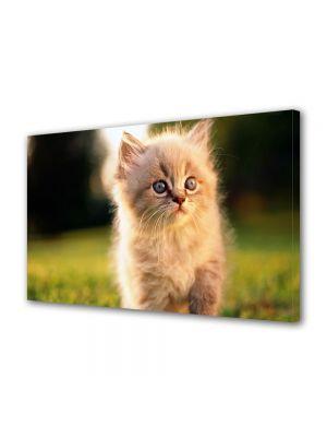 Tablou Canvas Luminos in intuneric VarioView LED Animale Pui de pisica pufos