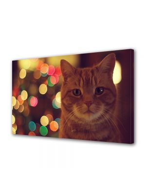Tablou Canvas Animale Pisica blanda