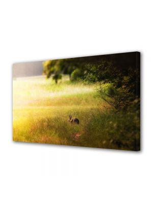 Tablou Canvas Animale Iepure pe campie