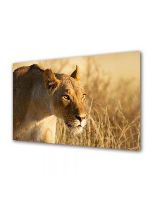 Tablou Canvas Luminos in intuneric VarioView LED Animale Femela de leu la vanatoare