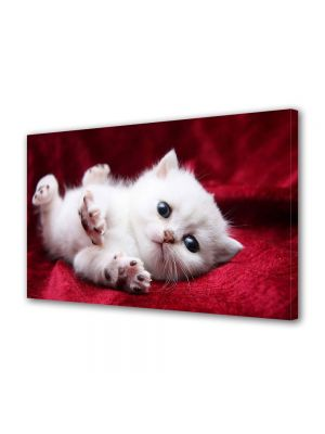 Tablou Canvas Animale Pisicuta alba