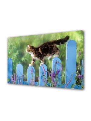 Tablou Canvas Animale Pisica mergand pe gard
