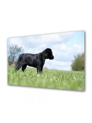 Tablou Canvas Animale Labrador in curte