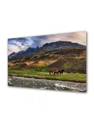 Tablou Canvas Animale Peisaj in Islanda