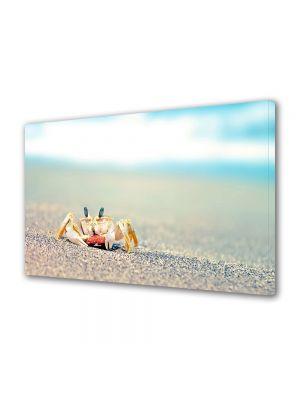 Tablou Canvas Animale Crab singuratic