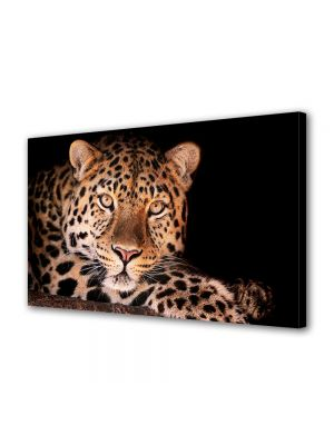 Tablou Canvas Luminos in intuneric VarioView LED Animale Leopard superb