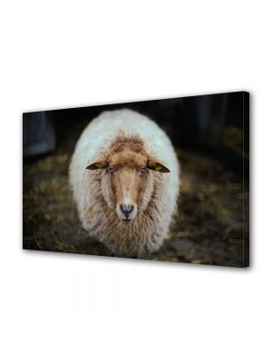 Tablou Canvas Animale Oaie in Olanda