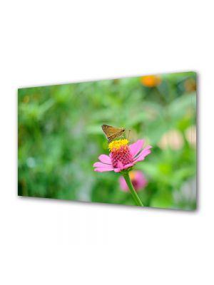 Tablou Canvas Animale Fluture pe floare rozalie