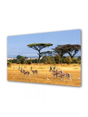 Tablou Canvas Luminos in intuneric VarioView LED Animale Antilope in Africa