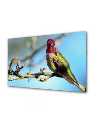 Tablou Canvas Luminos in intuneric VarioView LED Animale Pasare multicolora