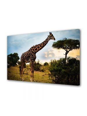 Tablou Canvas Luminos in intuneric VarioView LED Animale Girafa prea inalta