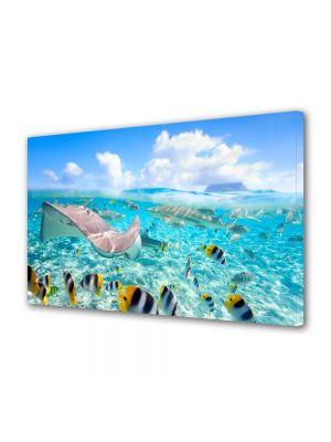 Tablou Canvas Animale Viata tropicala subacvatica