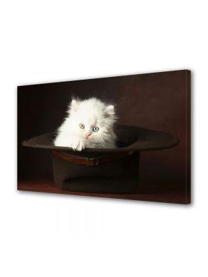 Tablou Canvas Animale Pisica pufoasa alba