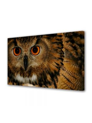 Tablou Canvas Luminos in intuneric VarioView LED Animale Bufnita superba