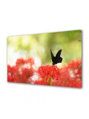 Tablou Canvas Animale Fluture negru