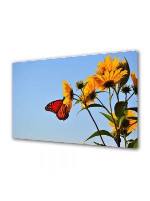 Tablou Canvas Animale Fluture pe floare