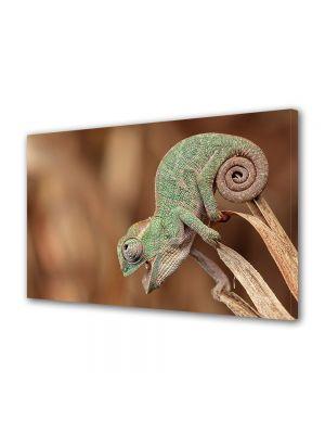 Tablou Canvas Animale Cameleon macro