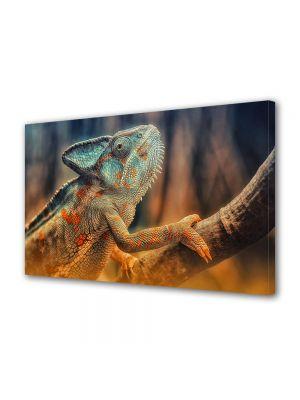 Tablou Canvas Luminos in intuneric VarioView LED Animale Cameleon reptila pe craca