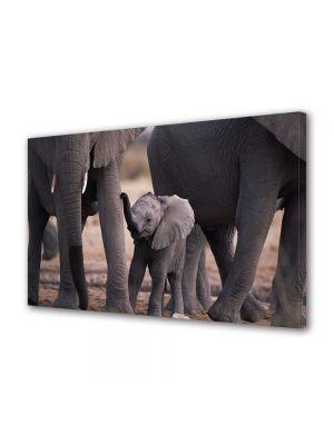 Tablou Canvas Animale Pui de elefant