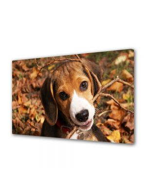 Tablou Canvas Animale Catel Beagle