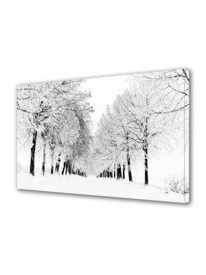 Tablou Canvas Iarna Copaci aliniati
