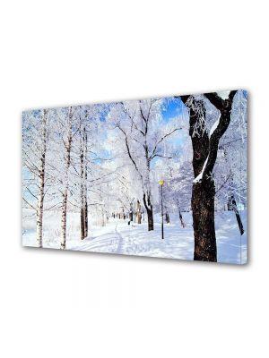 Tablou Canvas Iarna Copaci incaruntiti