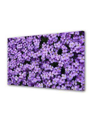 Tablou VarioView MoonLight Fosforescent Luminos in intuneric Flori Flori Violet Aubrieta