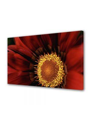 Tablou Canvas Flori Floare Gazania