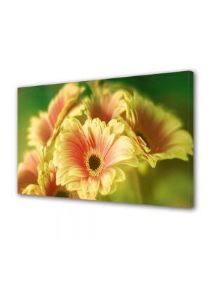 Tablou Canvas Flori Buchet de gerbera