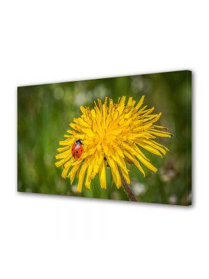 Tablou Canvas Flori Buburuza pe floare de papadie