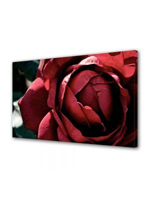 Tablou Canvas Flori Superb trandafir rosu inchis