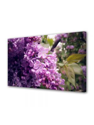 Tablou Canvas Flori Liliac