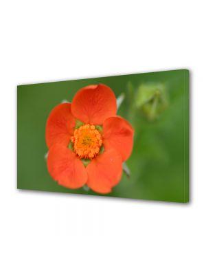 Tablou Canvas Flori O floare portocalie