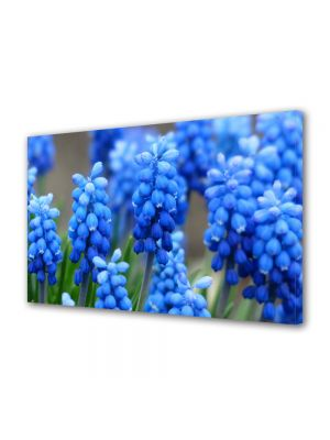Tablou VarioView MoonLight Fosforescent Luminos in intuneric Flori Flori albastre Muscari