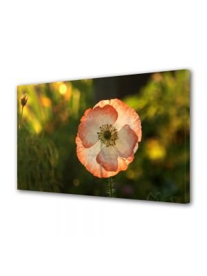 Tablou Canvas Flori Floare de mac inflorita