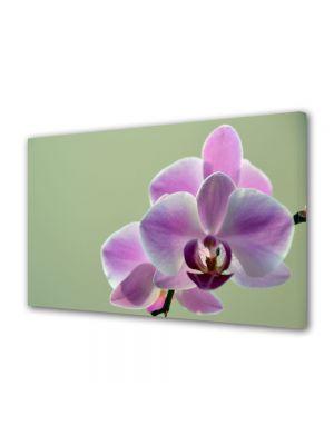 Tablou Canvas Flori Orhidee violet