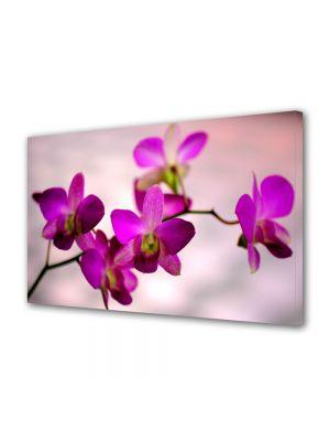 Tablou Canvas Flori Culoare de orhidee
