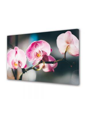 Tablou Canvas Flori Orhidee inflorite
