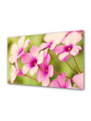 Tablou Canvas Luminos in intuneric VarioView LED Flori Petale de flori roz
