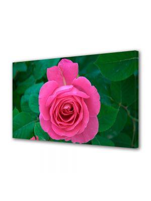 Tablou Canvas Luminos in intuneric VarioView LED Flori Trandafir rozaliu
