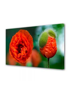 Tablou Canvas Flori Mac
