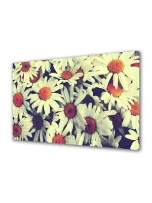 Tablou Canvas Flori Flori de musetel