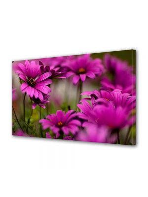 Tablou VarioView MoonLight Fosforescent Luminos in intuneric Flori Margarete roz
