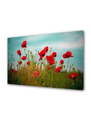 Tablou Canvas Flori Maci rosii