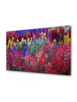 Tablou Canvas Flori Flori curcubeu