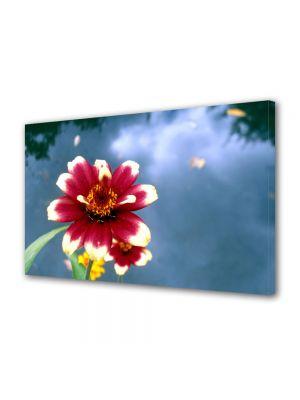Tablou Canvas Luminos in intuneric VarioView LED Flori Floare cu petale rosii si albe